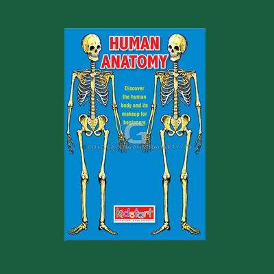 Human Anatomy Wipe Clean Book MBKANA