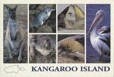 Kangaroo Island Fauna