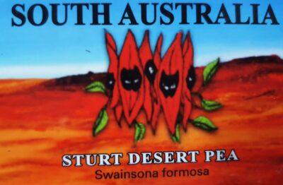 Magnet- Sturt Desert Pea